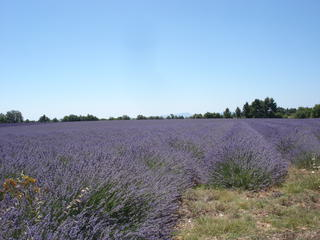 incentive-provence